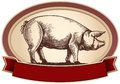 Graphical pig this illustration for a label or brand the is depicted in the style of engraving Royalty Free Stock Photo