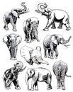 Graphical set of elephants isolated on white background, vector illustration