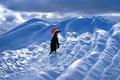 Grappige santa penguin Royalty-vrije Stock Foto's