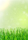 Grass as a background Royalty Free Stock Photo