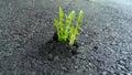 Grass  through the asphalt Royalty Free Stock Photo