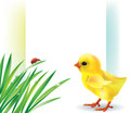 Grass and baby chick background Stock Photo