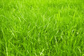 Grass background Stock Photos