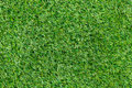 Grass the background of the Stock Photos