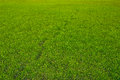 Grass background with a chain of footprints. Nature background. Royalty Free Stock Photo