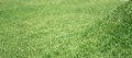 Grass background closeup elevation focus Royalty Free Stock Photos