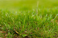 Grass background spring or summer with green Stock Photo