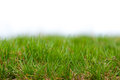Grass background spring or summer with green Stock Images