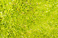 Grass background suggested to be used by web designers Royalty Free Stock Photography