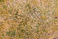 Grass background texture of in a field at a golf course during the winter looking almost dead Royalty Free Stock Image
