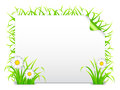 Grass banner blank decorated with and chamomile flowers Royalty Free Stock Photos