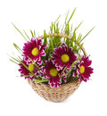 Grass in basket Royalty Free Stock Photo