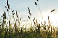 Grass basking in summer sun a field somerset uk Royalty Free Stock Image