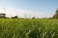Grass basking in summer sun a field somerset uk Royalty Free Stock Photography