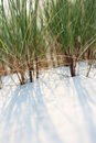 Grass on beach Stock Photography