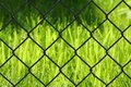 Grass behind a fence Royalty Free Stock Photo