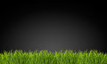 Grass on a black background green Royalty Free Stock Photo