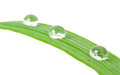 Grass blade with water drops Royalty Free Stock Photo