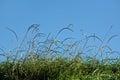 Grass blades over blue sky