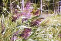 grass blossom meadow breeze forest summer day Royalty Free Stock Photo