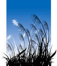 Grass on blue sky Stock Image