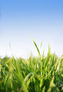 Grass,blue sky Royalty Free Stock Photo
