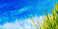 Grass blue sky spring banner Royalty Free Stock Images