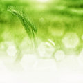 Grass and bokeh abstract background bright glowing green in the form of with grunge texture Royalty Free Stock Photo