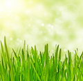 Grass  on bokeh  background Royalty Free Stock Photography