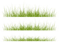 Grass borders set of vector Stock Image