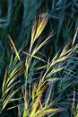 Grass in bright sunlight Royalty Free Stock Photography
