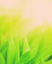 Grass close up fresh green Royalty Free Stock Photography