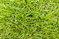 Grass Closeup Royalty Free Stock Image