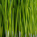 Grass Closeup Stock Photos