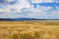 Grass and clouds, Eagle Lake, California Royalty Free Stock Photo