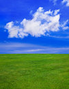 Grass and cloudy sky Royalty Free Stock Photo