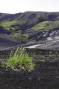 Grass colonising a bleak lava landscape near landmannalaugar iceland Stock Photography