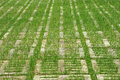 Grass ON  Concrete Floor Slabs Royalty Free Stock Photo