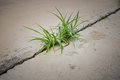 Grass on concrete Royalty Free Stock Photo