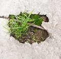 Grass in concrete Royalty Free Stock Photo