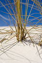 Grass coverd in sand Royalty Free Stock Photos