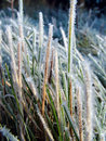 Grass covered in frost Stock Photos