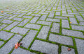Grass in the cracks moss fills between bricks creating an electric green outline new zealand Stock Photography