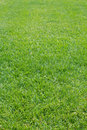 Grass  cutting   lawn Stock Images