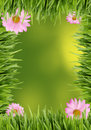 Grass and daisy background Royalty Free Stock Photo