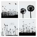 Grass and dandelion Royalty Free Stock Images