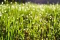 Grass dew 库存照片