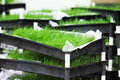 Grass divot close up detail selective focus Royalty Free Stock Photos