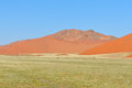 Grass and dune landscape near sossusvlei namibia in the tsaugab river floodplain Royalty Free Stock Image