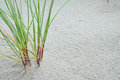 Grass and dunes Royalty Free Stock Photo